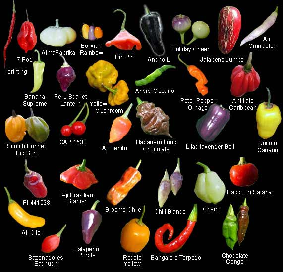 chile_peppers 571x550